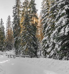 Iso-Syöte on paras hiihtokeskus talvilomalle ja hiihtolomalle. Koko perhe viihtyy tapahtumissa, laduilla ja rinteissä. Musti ja Lysti viihdyttää perheen pienimpiä Lumimaassa. Opettele laskettelu tai lumilautailu hiihtokoulussa.