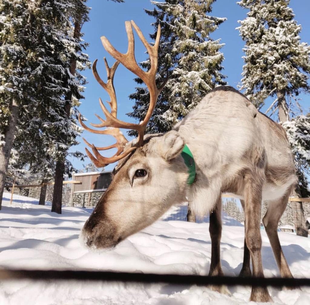 Musti ja Lysti porot asuvat Iso-Syötteellä Lumimaassa. Lumimaassa on paljon hauskaa tekemistä lapsille.